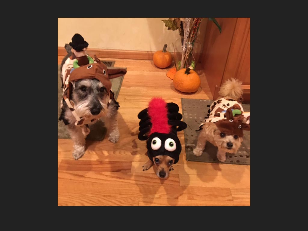 three dogs in costume