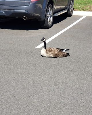 Canada in a UConn Health parking lot